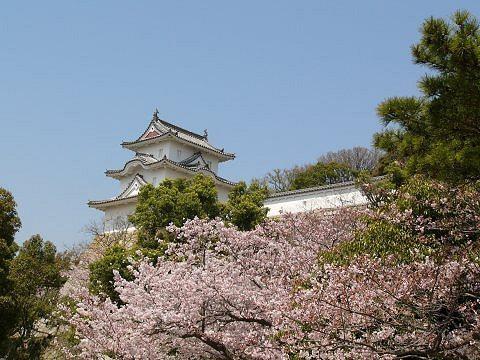 Sakura0901