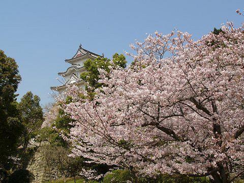 Sakura0902