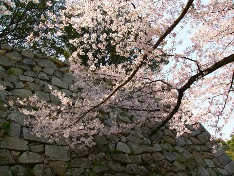 Sakura0904