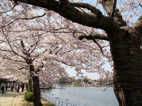 Sakura0906