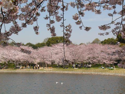 Sakura0907