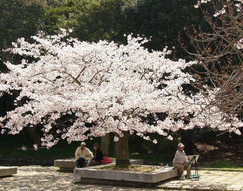 Sakura0910