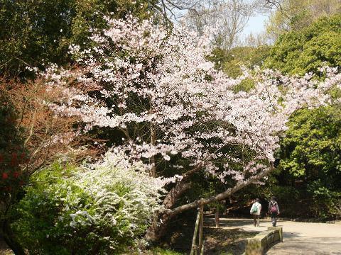 Sakura0911