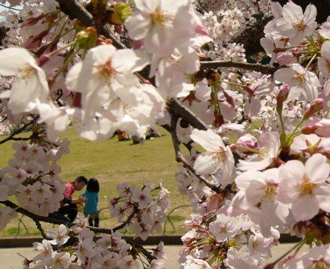 Sakura0912
