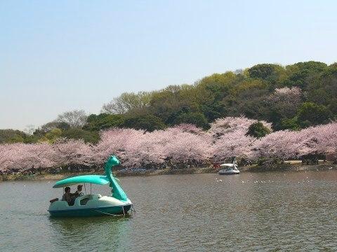 Sakura0913
