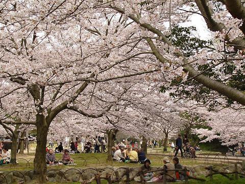 Sakura1002