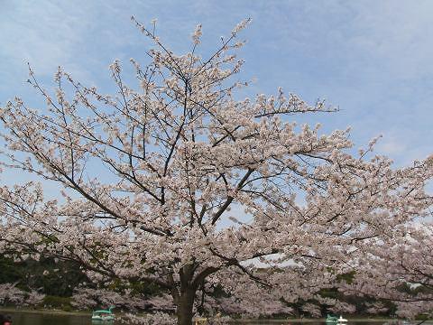 Sakura1004