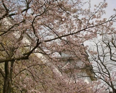 Sakura1009