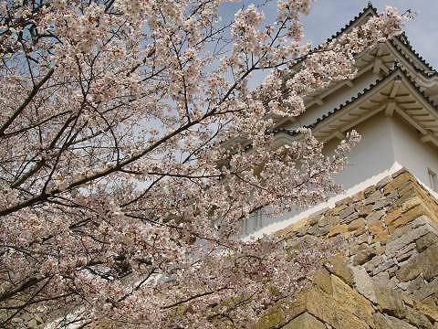 Sakura1010