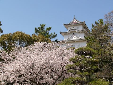 Sakura1105